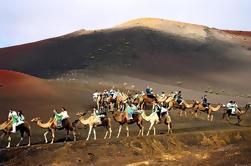 Camellos en las dunas de Maspalomas