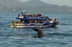 Full-Day Kaikoura Tour from Christchurch