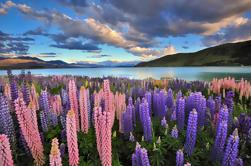 Excursión de 4 días al Gran Círculo de la Isla del Sur desde Christchurch
