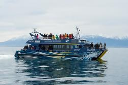 3 días de observación de ballenas en Kaikoura y tour en Christchurch