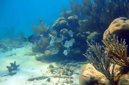 Ruinas de Tulum, Grand Cenote y Snorkeling Combo Tou