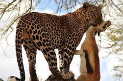 Safari de 5 días en Tanzania con un presupuesto de Arusha
