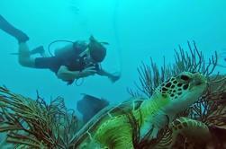 Descubre Scuba Diving en Fajardo