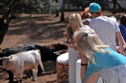 Visita privata a una Breeding Farm Cavallo andaluso a Ronda