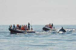 Observação de Golfinhos e Excursão de Grutas de Albufeira