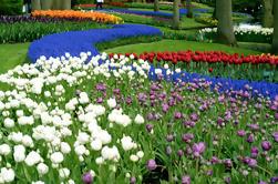 Excursão de meio dia a Keukenhof Gardens de Amsterdã