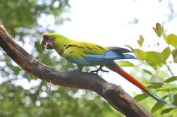Observación de aves en Cerro Blanco desde Guayaquil