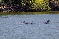 Avistamiento de delfines en Puerto el Morro desde Guayaquil