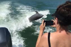 Excursão de observação de golfinhos perto de Marco Island