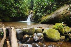Tour Privado: Reserva del Bosque Nuboso Mindo Nambillo desde Quito