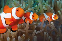 Billet d'entrée de l'Aquarium de Palma