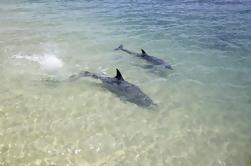 Delfínes de Mia de 3 días, Desierto de Pináculos y Parque Nacional de Kalbarri Tour desde Perth