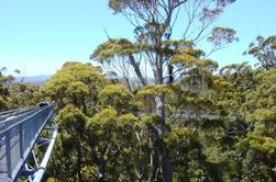 Valle de los gigantes y excursión de día de la caminata del árbol superior de Perth