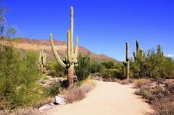U-Drive Desert Car Tour en el desierto de Sonora