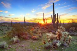 Hummer Night Tour en el desierto de Sonora