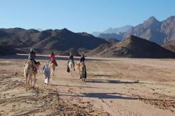 Beduino barbacoa en el desierto de Egipto en 4x4