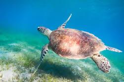 Snorkel del Mar Rojo