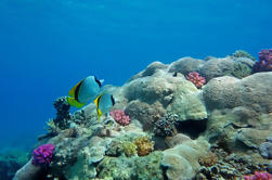 Sindbad submarino bajo el mar rojo