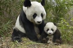 Highlight of Chengdu Private Day Trip: Chengdu Panda Base and Cooking Class in Sichuan Cuisine Museum
