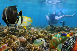 Excursión de un día a Taboga Island con snorkel desde la ciudad de Panamá