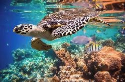 Esnórquel con tortugas en la Bahía de Akumal desde Cancún