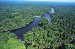Parque Nacional Tortuguero Costa Rica Tour de un día