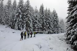 Excursión de un día a la Cordillera Negra de Vitosha, desde Sofía