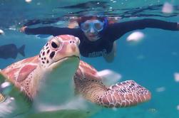 Esnórquel en Akumal Turtle Reef y Chikinha Cenote
