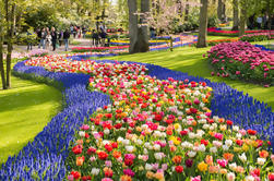 Day Trip to Keukenhof Tulip Gardens with a Spanish-Speaking Guide from Amsterdam