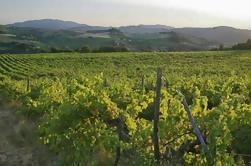 Toscana Campo - Val d'Orcia Zona: Excursión privada de día completo desde Roma