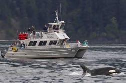 Orcas Island Observación de Ballenas