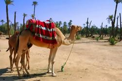 Caminata de dos horas en Palma de Marrakech