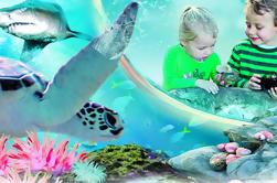 Passagem de atrações de Sydney: Aquário da vida de MAR, Olho da torre de Sydney, Jardim zoológico da VIDA SELVAGEM, Madame Tussauds e Santuário da VIDA de MAR Manly