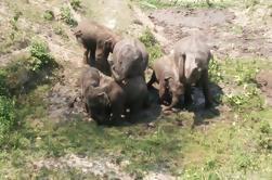 Visita de día entero al santuario de la selva del elefante en Chiang Mai