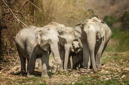 Visita de medio día por la mañana al santuario de la selva del elefante en Chiang Mai