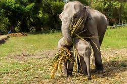 Visita de mediodía por la tarde al santuario de la selva del elefante en Chiang Mai