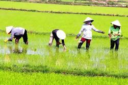 Excursão privada de Mekong de dia inteiro de Ho Chi Minh City
