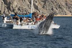 Tour de observación de ballenas en Los Cabos A bordo del Pez Ga