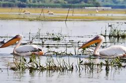 3 días de excursión privada - El Delta del Danubio para los amantes de la observación de aves de Bucarest
