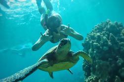 Occidental Maui Snorkel Aventura