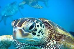 Snorkel de Mala Xpress