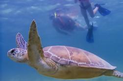 Experiencia de buceo con tortuga marina de Akumal