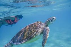 Turtle Snorkeling Adventure desde Cancún