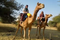 Chandigarh viaje de un día privado de Nueva Delhi, incluyendo Camel Ride