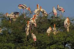 Excursión de un día a Keoladeo National Park desde Nueva Delhi