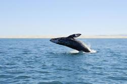 Pesca en aguas profundas o avistamiento de ballenas desde Bilbao