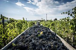 Excursão em grupo: Chianti Winery, Montefioralle, e Greve in Chianti