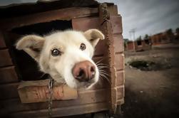 Visita una casa de Husky en Tromso