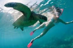 Tortuga marina y pescado tropical Snorkeling Adventure