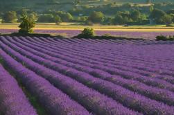 Tour Privado: Campos de Lavanda y Excursión de un día a Aix-en-Provence desde Marsella